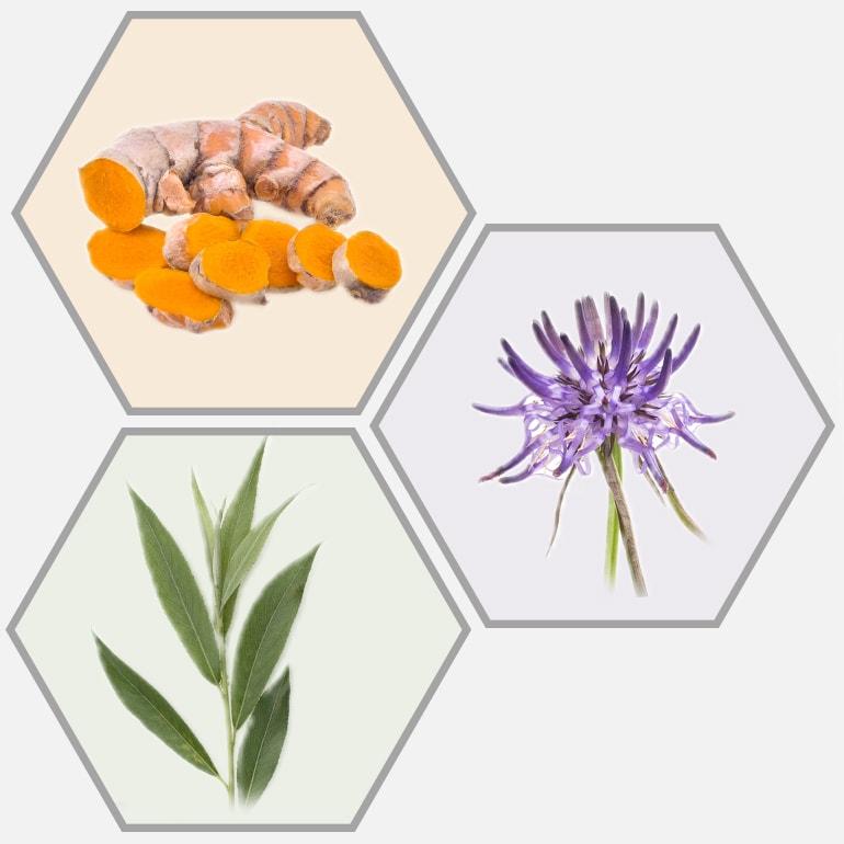 Rubaxx Pflanzenstoffe